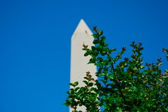 The Obelisk of Buenos Aires El Obelisco. Behind tree branches with green leaves royalty free stock photos