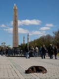 Obelisk of Thutmose III Royalty Free Stock Photo