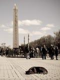 Obelisk of Thutmose III Royalty Free Stock Photography