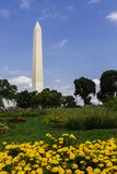 Obelisk of Washington Monument with Yellow Flowers, Washington D. Washington Monument with yellow flowers in the foreground in Washinton DC, USA stock photography