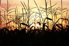 Oben genanntes Feld des Sonnenuntergangs Lizenzfreie Stockfotos