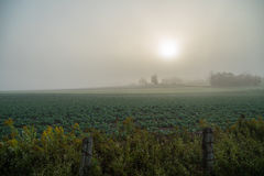 Oben genanntes Feld des starken Nebels Stockfotografie