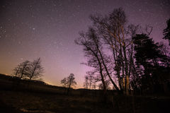 Oben genanntes Feld und Wald des nächtlichen Himmels Lizenzfreie Stockfotografie