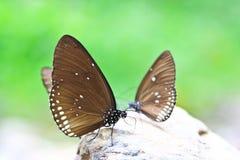 Oben geschlossen vom Schmetterling Lizenzfreie Stockfotos