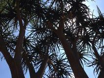 Oben schauen in Baum und in blauen Himmel Stockfoto