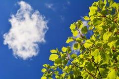 Oben schauen in den blauen Himmel mit einer Wolke unter einen Baum stockfotografie