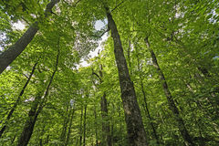 Oben schauen in den Wald Stockbilder