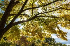 Oben schauen in die Bäume Lizenzfreie Stockfotografie