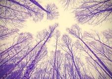 Oben schauen durch blattlose Bäume Lizenzfreies Stockfoto