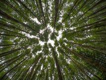 Oben schauen in einem Wald von Bäumen Lizenzfreies Stockbild