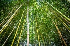 Oben schauen in einen Bambuswald stockbilder