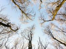 Oben schauen in Forest Tree To Sky Stockbilder