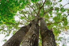 Oben schauen im Wald Lizenzfreie Stockbilder