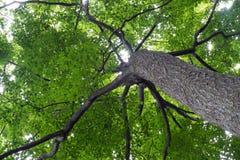 Oben schauen unter einem Baum Lizenzfreies Stockbild