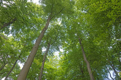 Oben schauen von unterhalb des Baums Lizenzfreies Stockbild