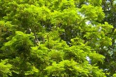 Oben schauen von unterhalb des Baums Lizenzfreie Stockbilder