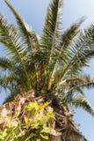 Oben schauen zu einer Palme stockfotografie