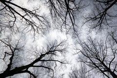 Oben schauen zum grauen Himmel Lizenzfreie Stockfotografie