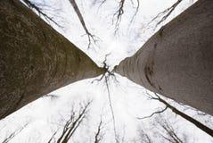 Oben schauen zum Himmel durch Buchen, die ihre Blätter verloren haben Stunden und Landschaft lizenzfreie stockfotografie