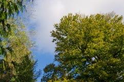 Oben schauen zum Himmel und zu den Bäumen lizenzfreie stockfotografie