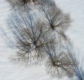 Obenliegende Ansicht der Bäume und der Schatten auf Schnee Stockbild