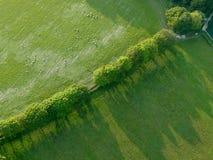 Obenliegende Ansicht der Baumreihe und der Schafe mit langen Schatten stockfoto