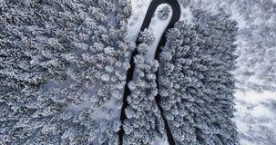 Obenliegende von der Luftdraufsicht über Spitzkehredrehungsstraße im Gebirgsschnee bedeckte Winter forestWhite Kieferholz schneeb stock footage