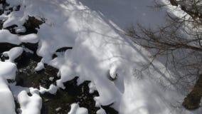 Obenliegendes Luftbrummenflug establisher über schneebedecktem sonnigem Flussnebenfluss- und -waldholz Winterschnee in der Gebirg stock video