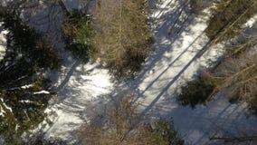 Obenliegendes Luftbrummenflug establisher über schneebedecktem sonnigem Waldholz Winterschnee in der Gebirgsnatur draußen stock video footage