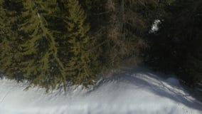Obenliegendes Luftbrummenflug establisher über schneebedecktem sonnigem Waldholz Winterschnee in der Gebirgsnatur draußen stock footage