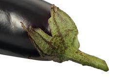 Oberżyny Solanum melongena lub aubergine owocowy zakończenie odizolowywający na białym tle Obraz Stock