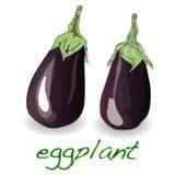 Oberżyny lub aubergine warzywa wektor ilustracja wektor