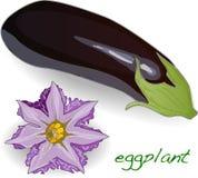 Oberżyny lub aubergine warzywa wektor royalty ilustracja