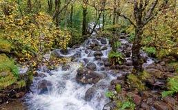 Obere Fälle, Glen Nevis im Herbst stockfotografie