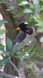 Obere Niederlassungen des Vogels des Baums Stockbilder