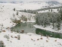 Oberer Yellowstone-Fluss Lizenzfreies Stockfoto