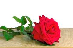 Oberfläche der Rotrose auf dem Tisch auf einem weißen Hintergrund Stockfotografie