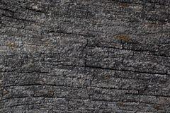 Oberfläche des faulen Holzes Lizenzfreies Stockbild