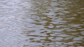 Oberfläche des Wassers stock footage