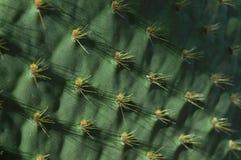 Oberfläche eines Kaktus Stockfotografie