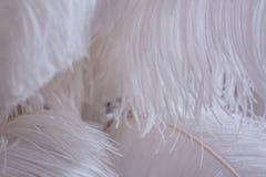 Oberfläche umfasst mit den weißen Federn als Hintergrundbeschaffenheitszusammensetzung Lizenzfreies Stockbild