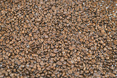 Oberfläche umfasst mit Röstkaffeebohnen stockfoto
