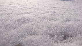 Oberflächen-glacée Lizenzfreie Stockfotografie