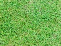 Oberflächenhintergrund des grünen Grases Stockfotos
