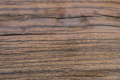 Oberflächenrisse des Holzes Stockfoto