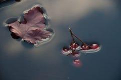 Oberflächenspannung, die Beeren sinken in Wasser Stockfoto