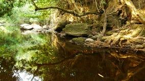 Oberflächenstrom im Nationalpark Stockbild