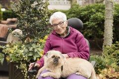 Oberoende äldre kvinna utanför i rullstol med hunden Arkivfoton