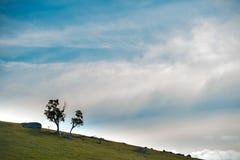 Oberon, nsw central Australia de las altiplanicies Imagen de archivo libre de regalías