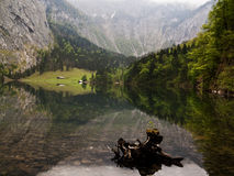 The Obersee in the Bavarian Alps. Fischunkelalm, Obersee, Berchtesgadener Land, Bavarian Alps. Misty weather. On the foreground, a tree in the water, in the Stock Image